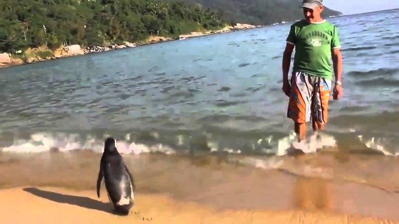 PINGUIM VISITA SEU AMIGO NA ILHA GRANDE