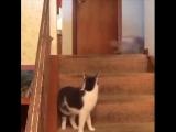 .. Мой кот только что активировал турбо-режим моей собаки ...