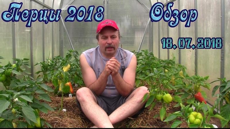Дикие перцы и помидорные сорняки