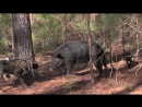 Hog Dogging with Southern Cross Cut Gear and Catch Dawg Productions