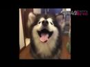 Хочу такую собаку 449