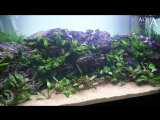 Aquascaping_Lab_Tutorial_Natural_planted_Aquarium__African_Wall__size_80x_35x45h_120L_.mp4