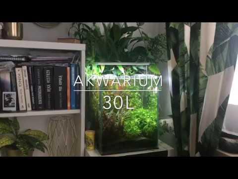 Akwarium 30l Krasnorosty Zmiana Filtracji Aquael Asap 800