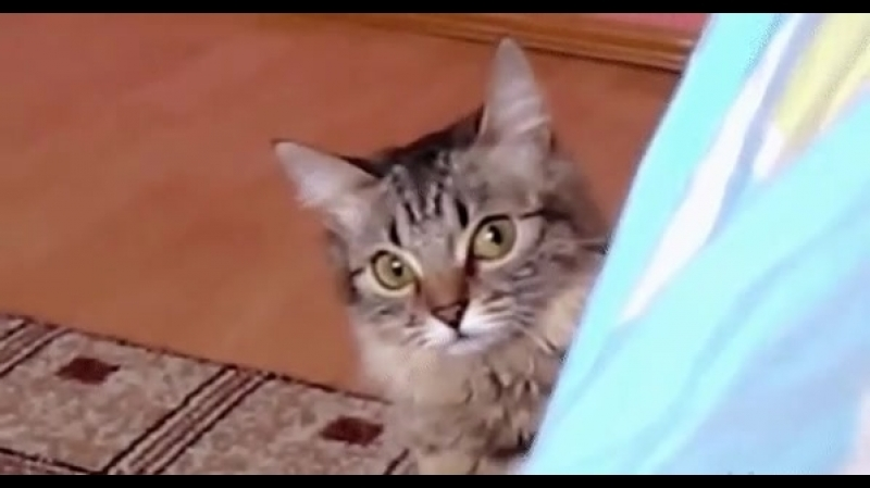 кот смотрит зырит ТЫ ДАУН