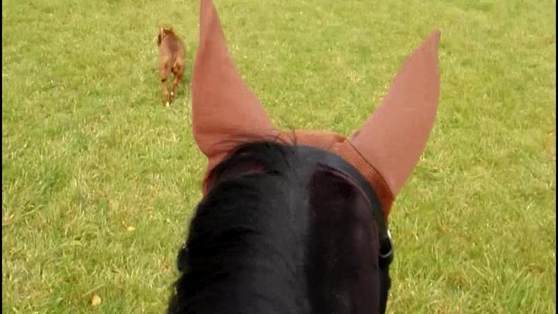 Шарлин, Нюша и лошадка