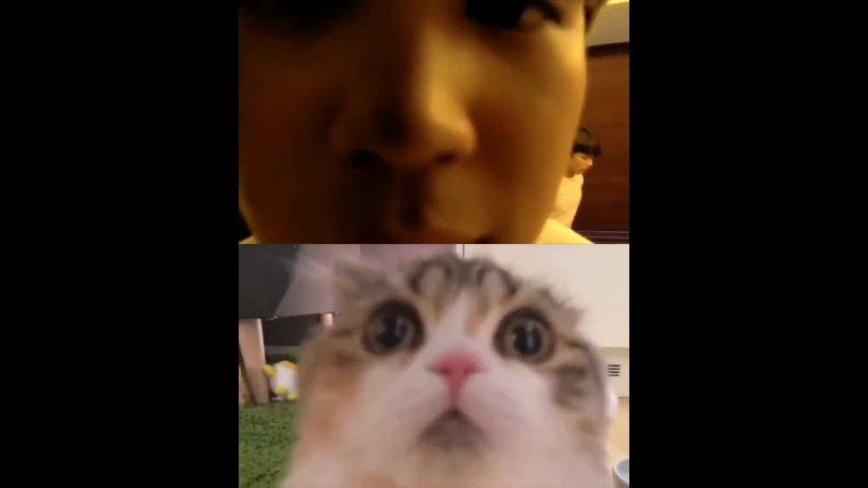 HE IS A KITTY UWU LOOK AT THE NOSE.mp4