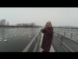 Мама говорит до свидания ! лебедям