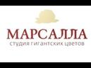 Серединка настенного пиона из гофрированной бумаги Ростовой пион