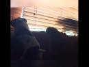 Кошка и собака - история взаимоотношений