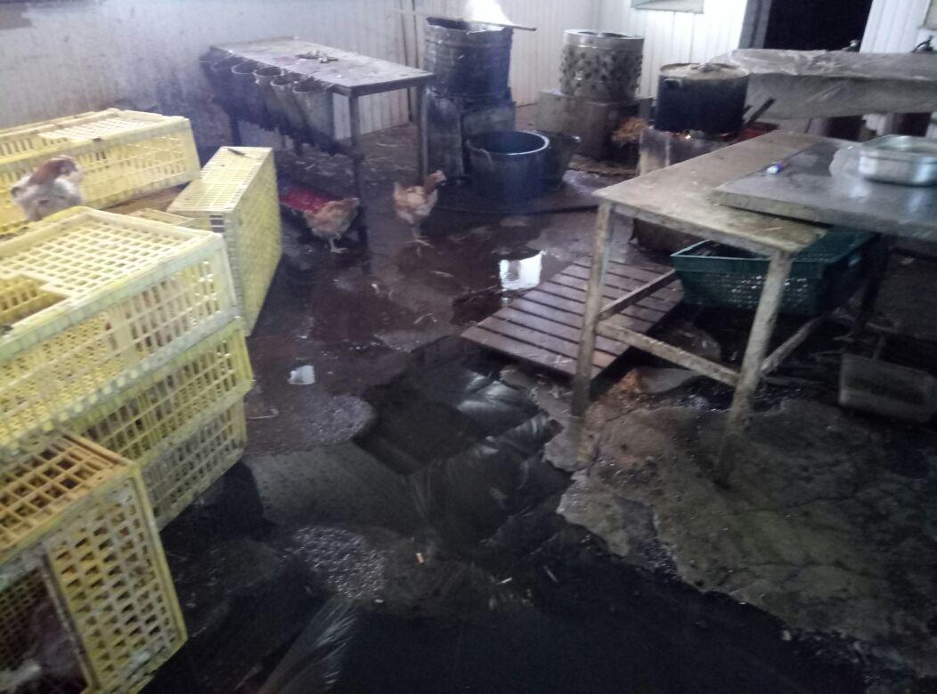 Под Таганрогом обнаружили подпольный цех по производству мяса птицы