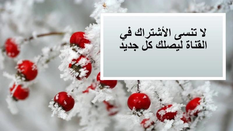 تفسير القرآن الكريم سورة القلم الحلقة الث15