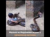 Малыш из Индонезии играет с гигантским питоном