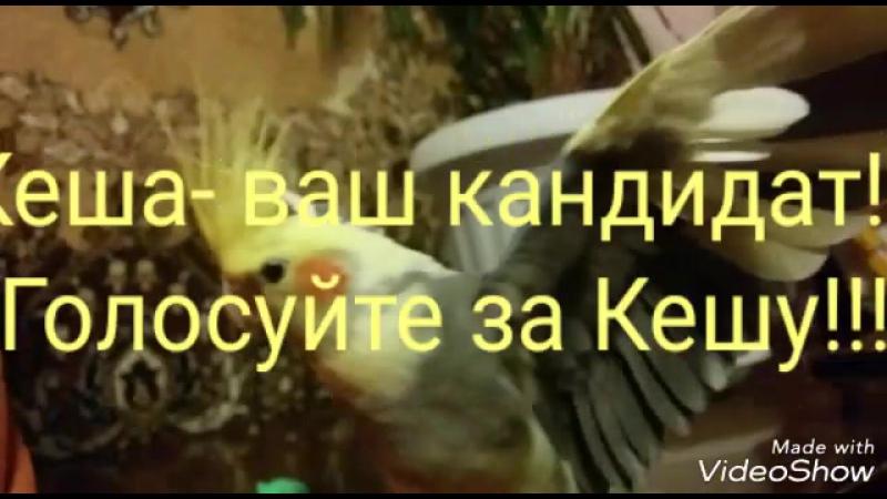 Кандидат в президенты 2018 Кеша от фракции Свобода попугаям