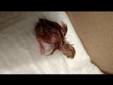 Вот он -наш первый перепеленок!Андрей все таки вывел птенца в своём самодельном инкубаторе!!! Ждём остальных.