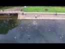 хозяин медленно падающего в озеро дрона пытается спасти его