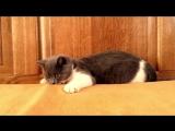 Кошка помогает учить английский