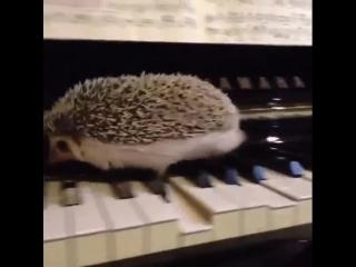 Même les hérissons peuvent faire du jazz... - Manu dans le 6-9 sur NRJ.mp4