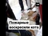 Кота спасли от гибели в пожаре