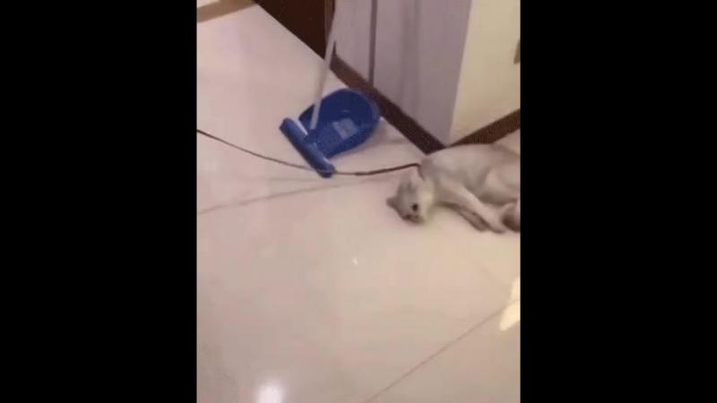 Жизнерадостный кот