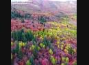 Волшебные краски осени ?? А вы любите это время года?