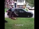 Пес-полицейский (K9) отказывается ехать на службу