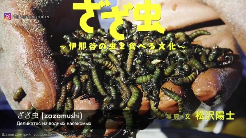 Шамов Дмитрий В Японии едят насекомых Рискнете попробовать Странная японская еда Что едят японцы