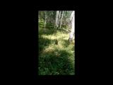 Лесной нежданчик