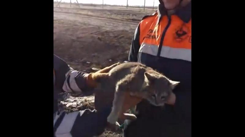 Спасение кошки в Караганде