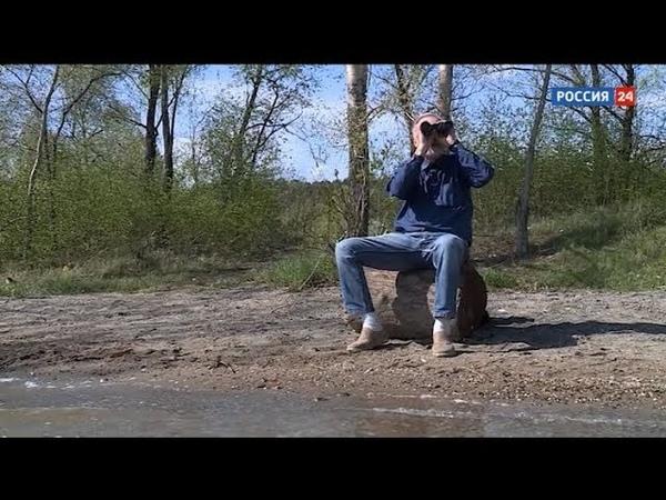 «Полёт Алексея Яновского».Телеочерк о новосибирском орнитологе