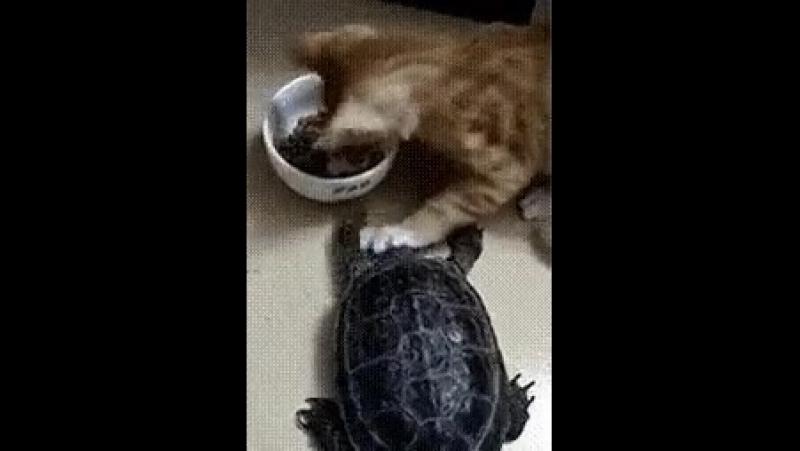 не трогай!