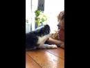 Кей Джей и его собачка