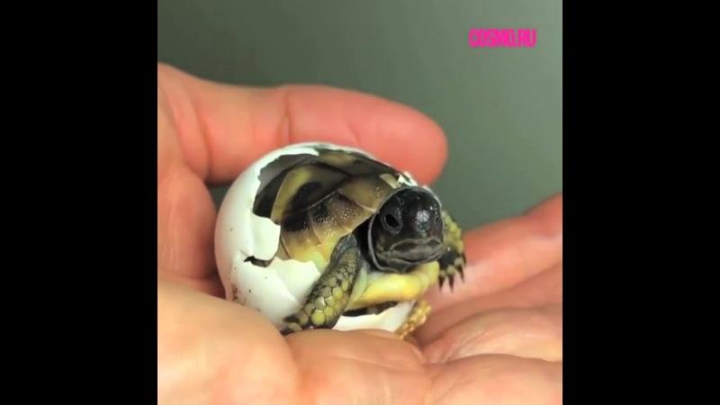 Черепашонок вылупился из яйца