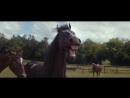 Смеющиеся лошади
