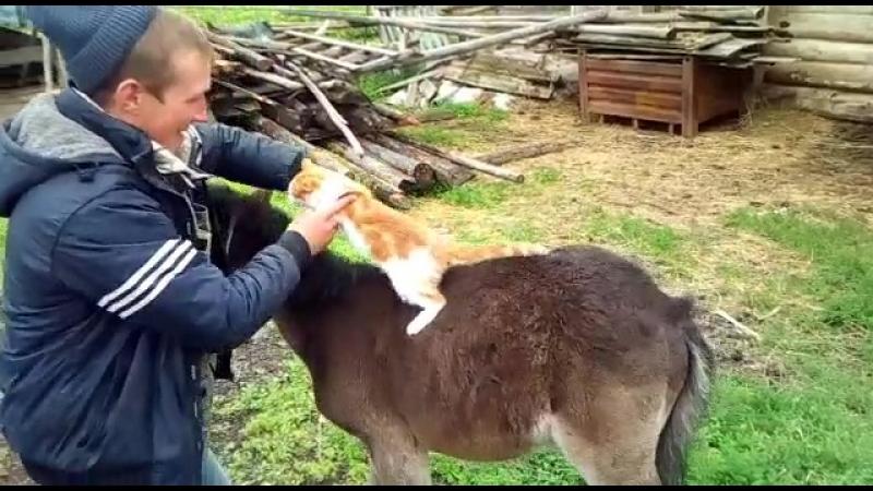 Жеребёнок знакомится с котом ...