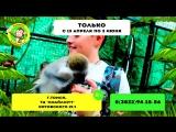 Выставка обезьян Лимпопо в Томске с 13.04 до 03.06.18г.