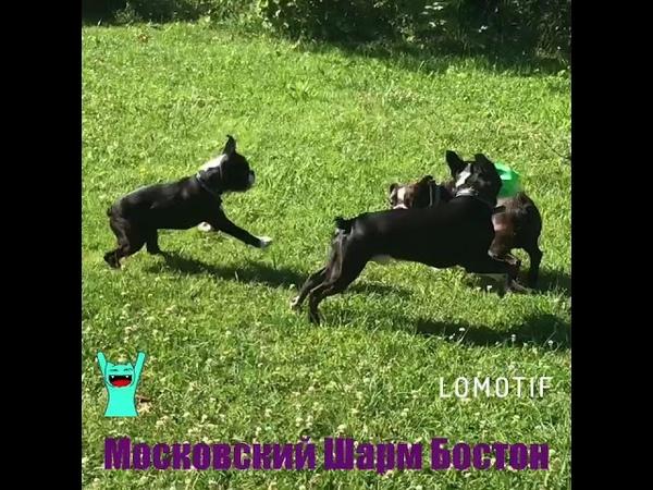 Московский Шарм Бостон -ура!