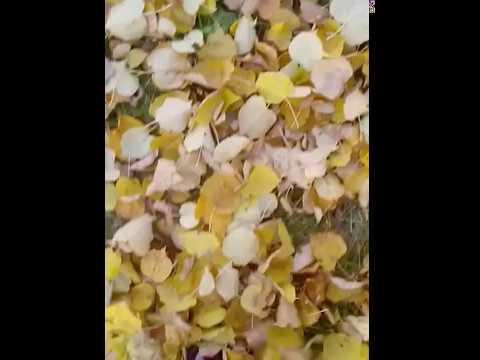 Просто шуршать листьями