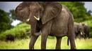 топ 10 опасных животных в мире