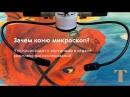 """Исследования. """"Купание красного коня"""" Кузьмы Петрова-Водкина"""