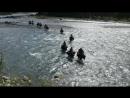 Переправа через Кураган. Кони-корабли. Фрагмент из фильма Столичные штучки . Путешествие по Катунскому заповеднику.