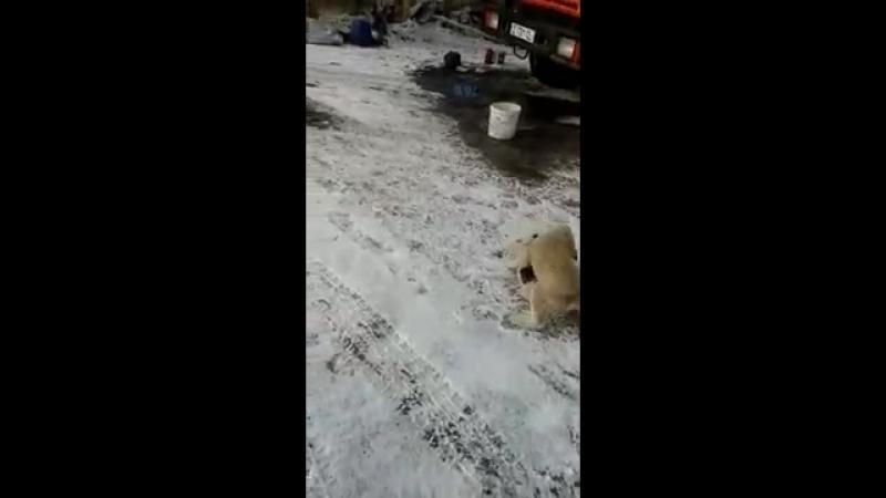 Бойцовые щенки.mp4