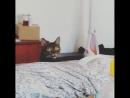 Ты кошка что ли?