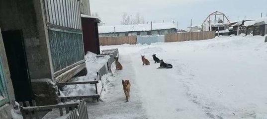 Бездомные собаки в Усть-Илимске и районе