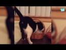 Приколы с Котами - Смешные коты и кошки 2018 _ ТЕСТ НА ПСИХИКУ, ПРО 720 X 1280 .mp4