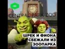 Шрек и Фиона сбежали из иркутского зоопарка | ROMB