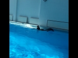 ?плавание с дельфинами
