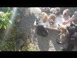 Коты в Симеизе. Ужин.