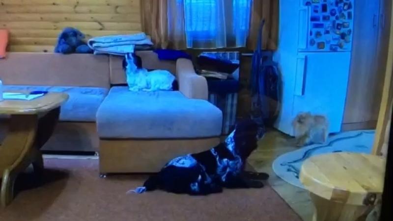Что делают собаки, когда нас нет дома