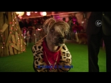 ShowDogs_HD_Justice_TRAILER_30sec_v02
