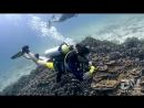 ПодводноеВидео дайв-клуба 😀👌✈🇹🇭🐬🐟🐠🐡🦈🐙🐚🦀